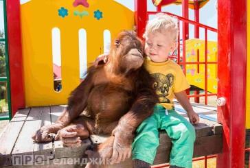 «Сафари-парк» Геленджика вошелв десятку лучших зоопарков России