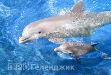 В геленджикском дельфинарии пополнение