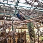 Контактный зоопарк «Зов джунглей»