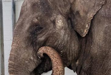 Самый известный слон СССР поселится в Геленджике